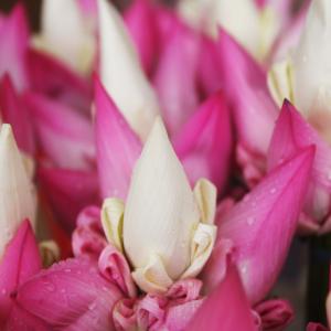 Bloemen bestellen en boeketten bezorgen is snel en eenvoudig via VanKaarstotServet