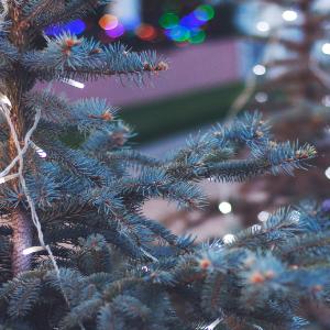 Op zoek naar echte kerstboomkaarsjes voor in de kerstboom?